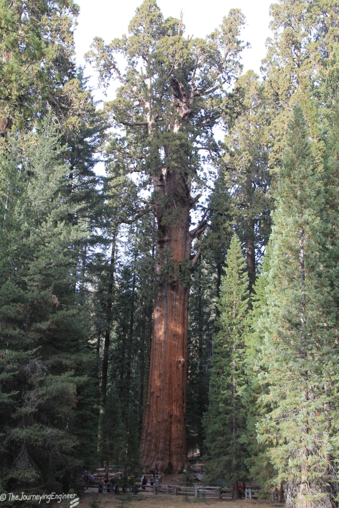 Shot from afar to capture the whole of General Sherman Tree